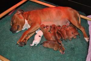 geboorte pups 097