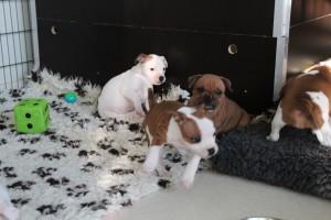Pups 02-01-2016 035